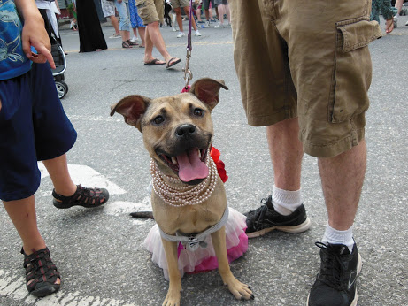MaxFloof Dog Meetup at Freddy's Dog Fashion Show - July 21st